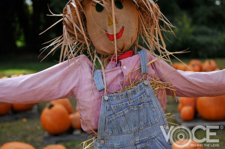 Scarecrow - Up Close